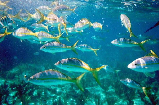 Snorkeling Off Grand Bahama Island